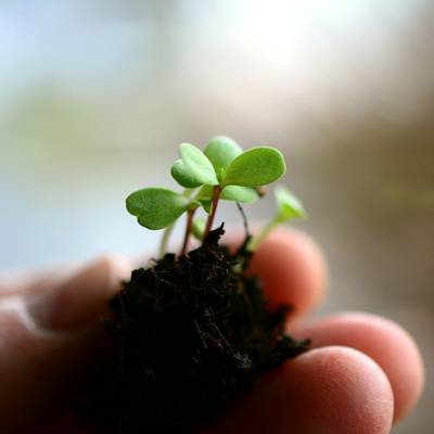 photo of a soil and small seedling